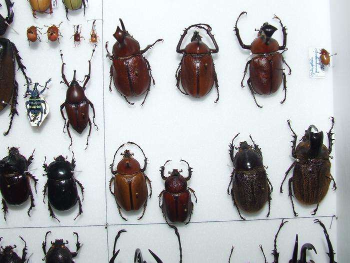 Présentation des collections Entomologiques - Page 2 M_215435157_0