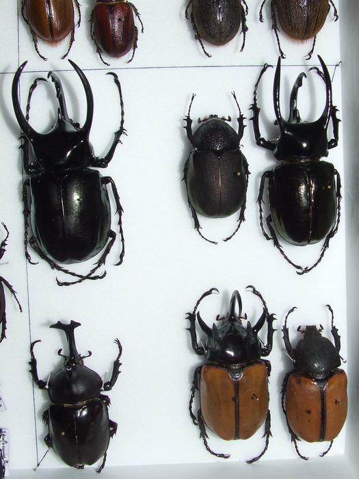 Présentation des collections Entomologiques - Page 2 M_215435231_0