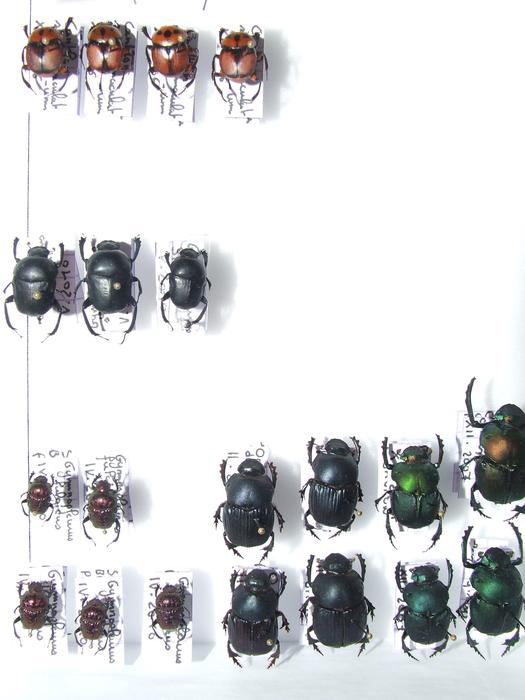 Présentation des collections Entomologiques - Page 2 M_215435351_0