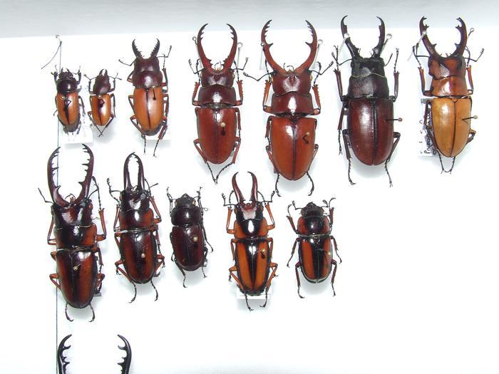 Présentation des collections Entomologiques - Page 2 M_215435537_0