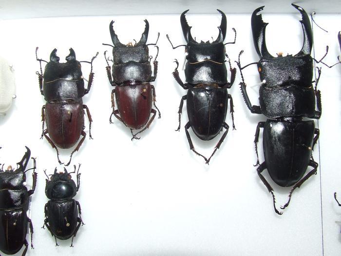 Présentation des collections Entomologiques - Page 2 M_215435594_0