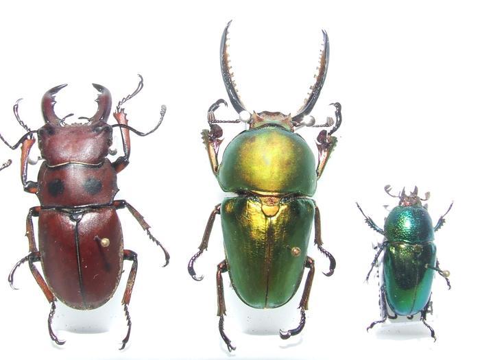 Présentation des collections Entomologiques - Page 2 M_215435629_0