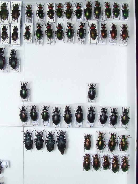 Présentation des collections Entomologiques - Page 2 M_215435691_0