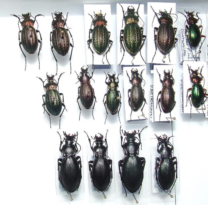 Présentation des collections Entomologiques - Page 2 M_215435784_0