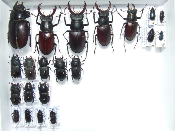 Présentation des collections Entomologiques - Page 2 M_215436108_0