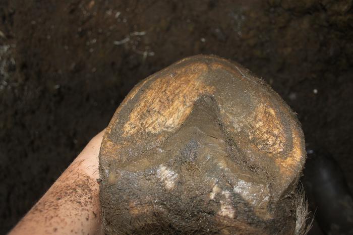 pieds de ondine et merlerault, mes premiers parages M_219206555_0