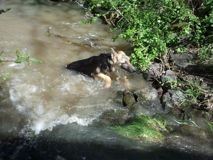 A la rivière et ... plouf dans l'eau !!