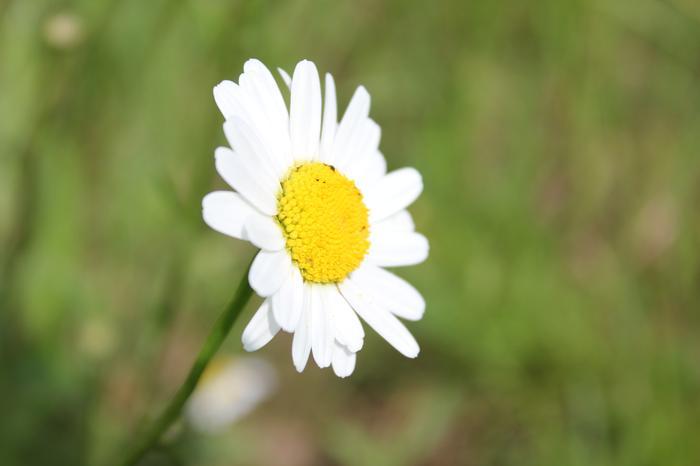 Vos plus belles rencontres avec la nature M_238358840_0