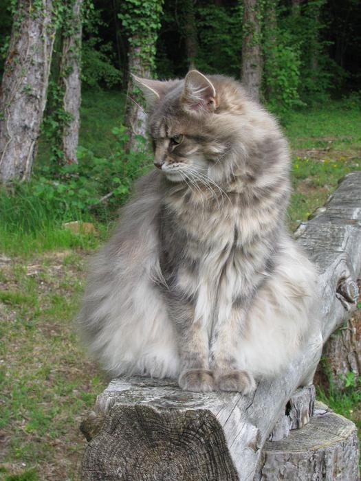 Nouvelles de Hoops petit chaton blanc! M_242477182_0