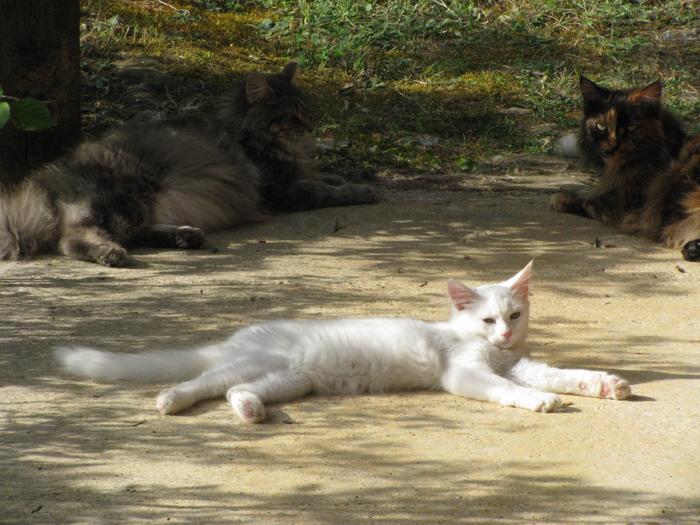 Nouvelles de Hoops petit chaton blanc! M_247346190_0