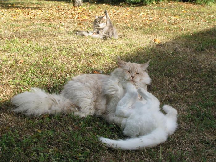 Nouvelles de Hoops petit chaton blanc! M_248397860_0