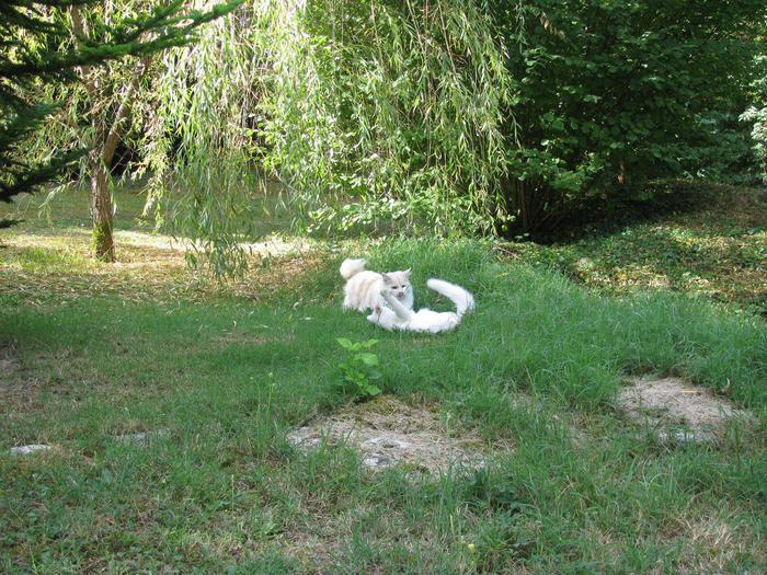 Nouvelles de Hoops petit chaton blanc! M_248402203_0