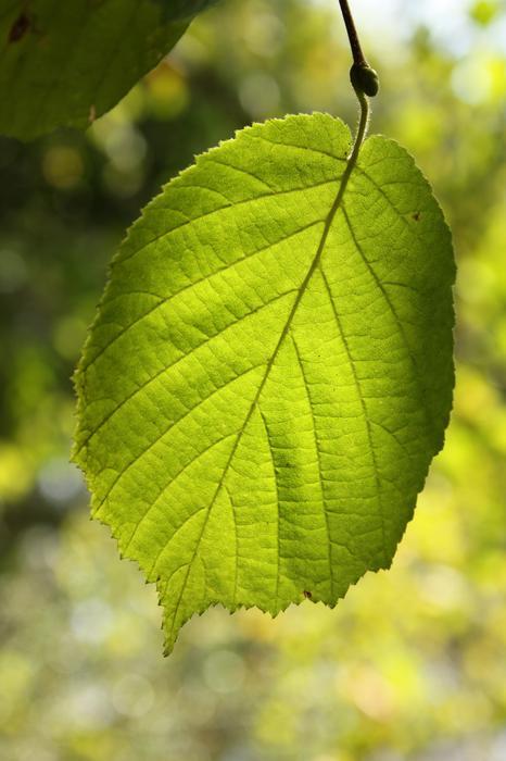 Vos plus belles rencontres avec la nature - Page 5 M_256229185_0