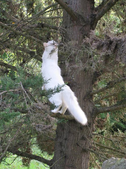 Nouvelles de Hoops petit chaton blanc! M_256201492_0