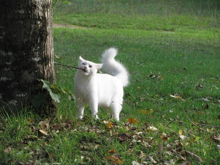 Nouvelles de Hoops petit chaton blanc! M_256202697_0