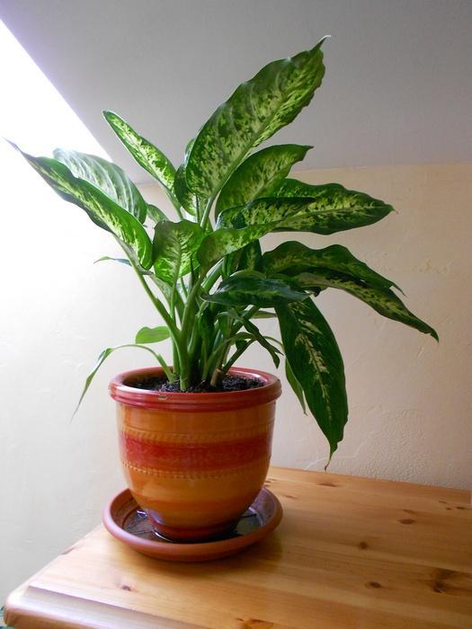 ma plante m'inquiete ! M_258637106_0