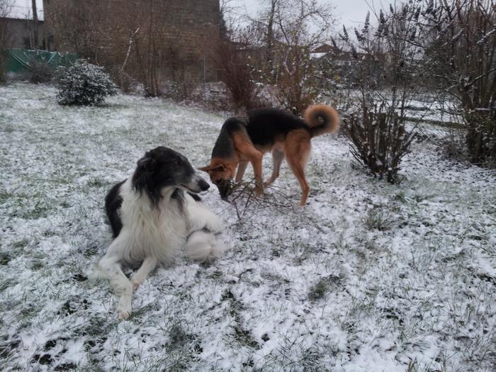 1ères neiges de l'année !