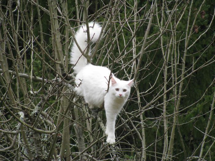 Nouvelles de Hoops petit chaton blanc! M_275398563_0