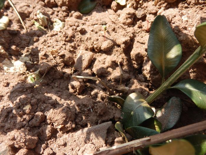 Protéger ses jeunes plants avec des fougères M_296562122_0