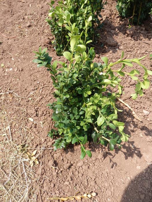 Protéger ses jeunes plants avec des fougères M_296664044_0
