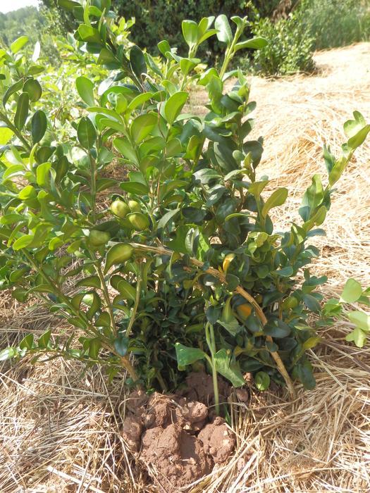 Protéger ses jeunes plants avec des fougères M_296664129_0
