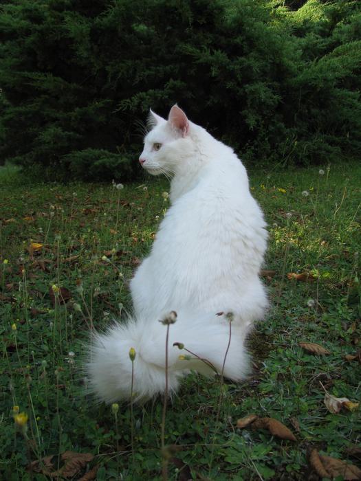 Nouvelles de Hoops petit chaton blanc! M_300197571_0