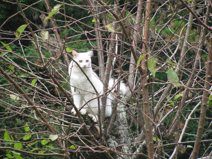 Nouvelles de Hoops petit chaton blanc! M_319392564_0