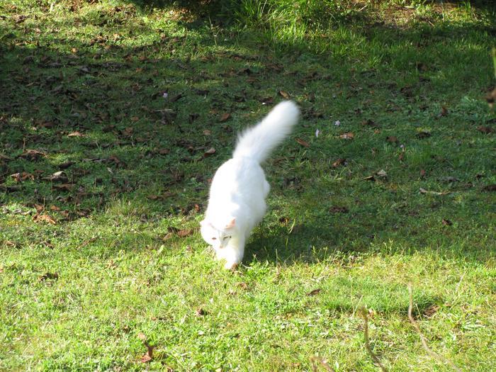 Nouvelles de Hoops petit chaton blanc! M_319396077_0