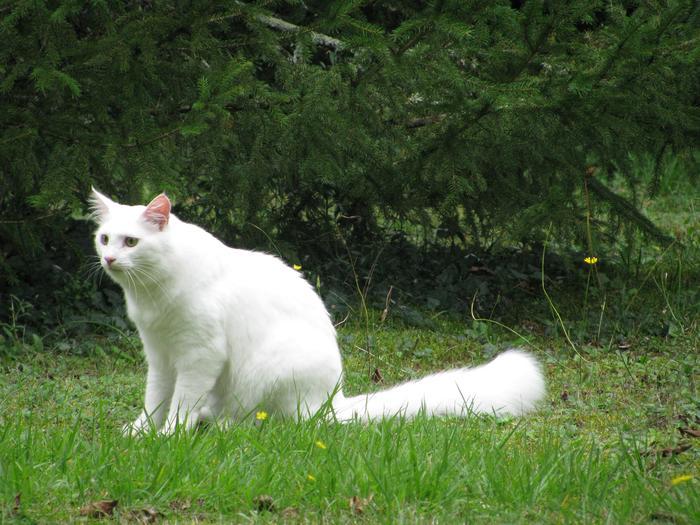 Nouvelles de Hoops petit chaton blanc! M_319407435_0
