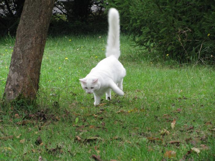 Nouvelles de Hoops petit chaton blanc! M_319411035_0